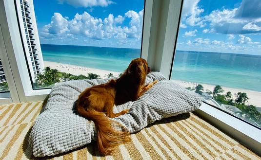 Trump International Beach Resort Miami