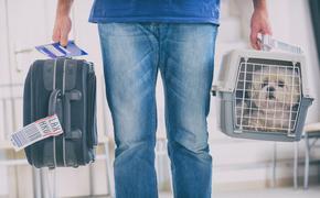 dog, plane, luggage