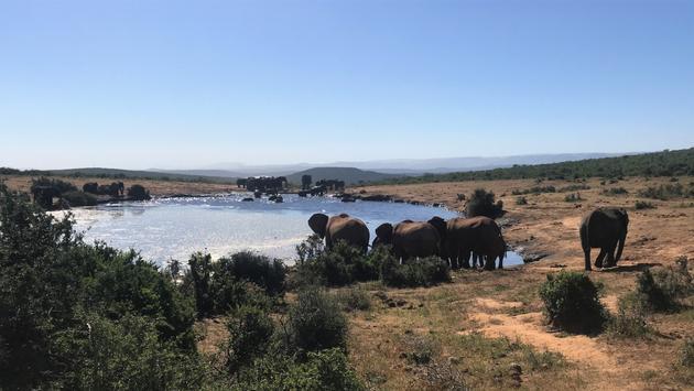 Le parc naturel de Kragga kamma, en Afrique du Sud.
