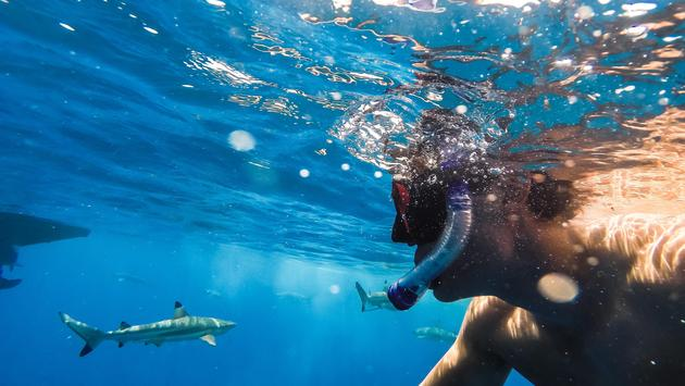 A man snorkeling with sharks in Bora Bora, French Polynesia