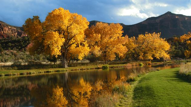 Cottonwood Trees at Gateway Canyons Resort & Spa