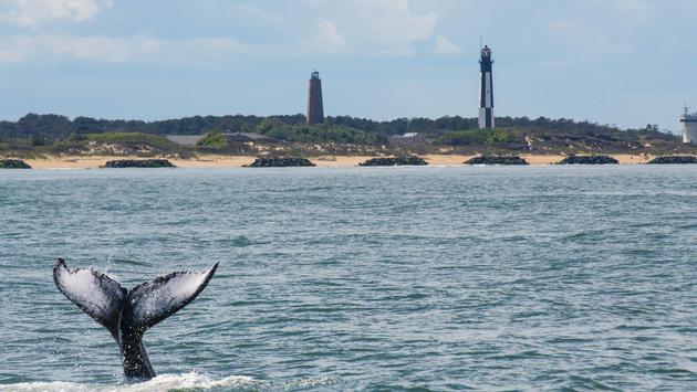 Whale tail off of Virginia Beach, Virginia