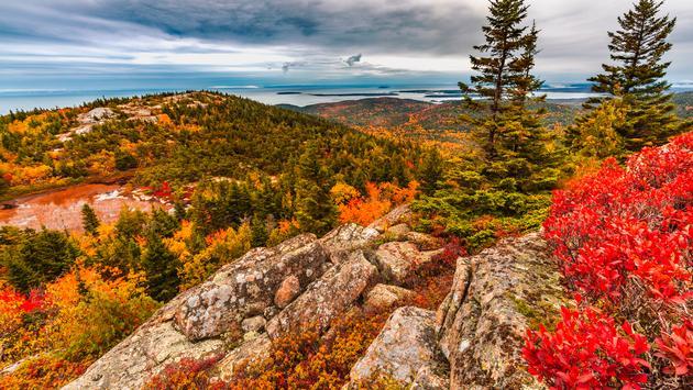 Fall Foliage atop Cadillac Mountain in Acadia National Park, Maine