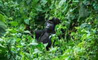 Uganda & Gorillas Overland from $1762