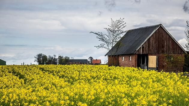Barn and a field of flowers