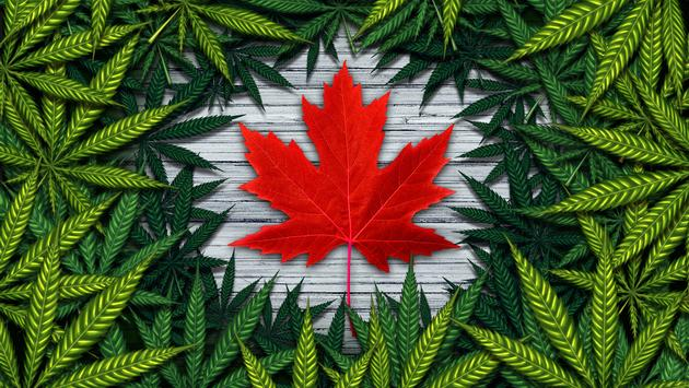 Canada Cannabis, Weed, Marijuana, Tourism