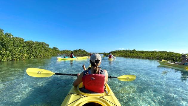 Kayak Eco Tour with Big Blue Collective