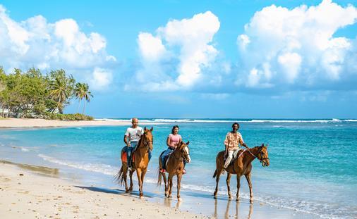Horseback Riding Barbados