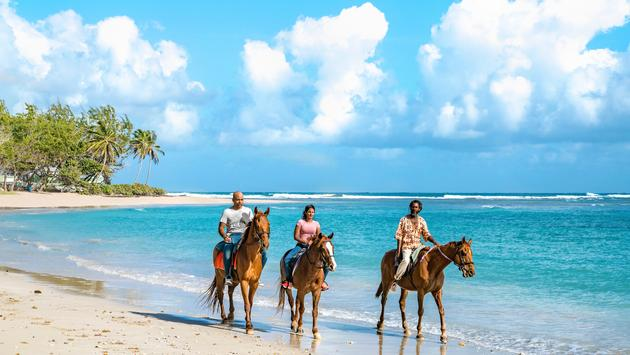 Horseback Riding Barbados