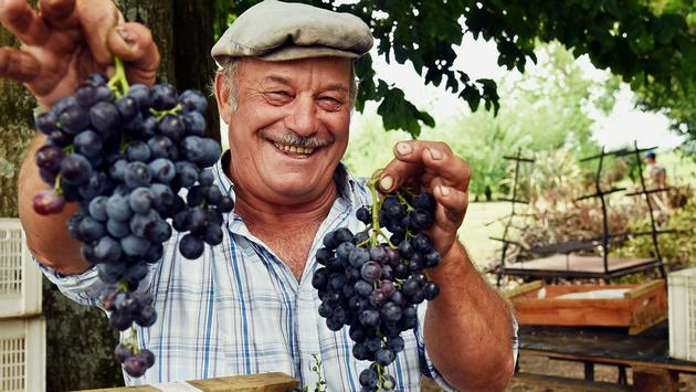 Carmelo Vineyard, Uruguay