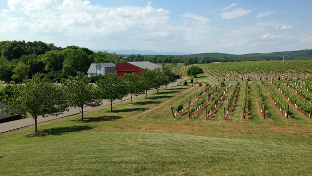 Central Virginia, Winery, Wine Country