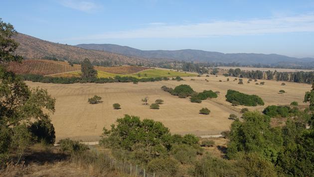 Landscape of Casablanca Wine Region in Chile.