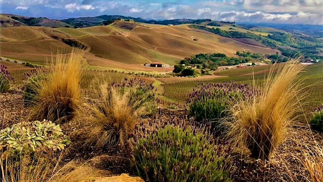 Paso Robles views from DAOU Vineyards
