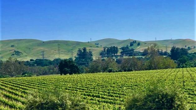 Tri-Valley Vineyards