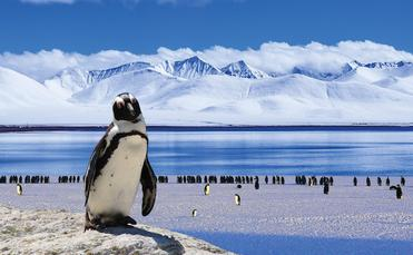 Central Holidays, Antarctica, penguins