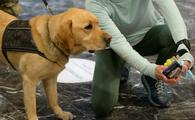 Labrador retriever involved in the New York National Guard