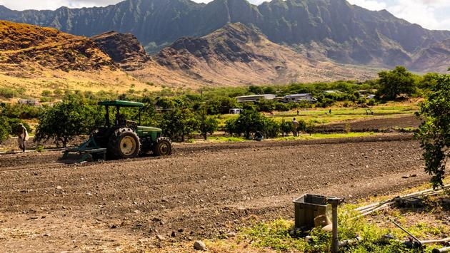 Ma'o Farm on Farm to Forest, Oahu, Hawaii