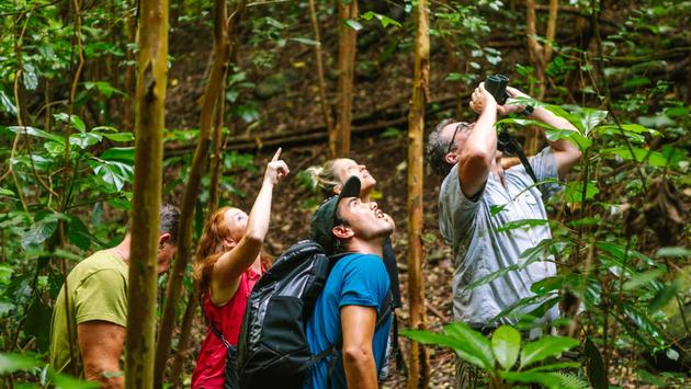 Bird Watching tour in Oahu, Hawaii