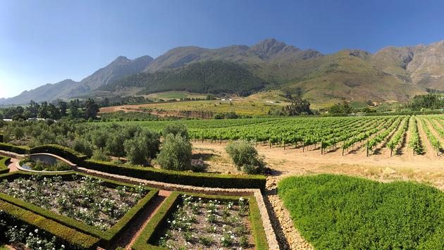 Vineyards and mountains in Franschhoek, south africa