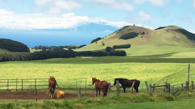 Kahua Ranch, Big Island, Hawaii