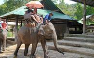Asian elephant is used to take tourists for rides.