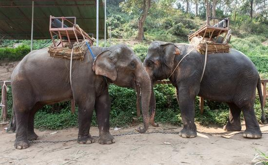 A venue in Thailand where elephants are used for tourist rides