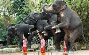 An elephant show in Bangkok, Thailand