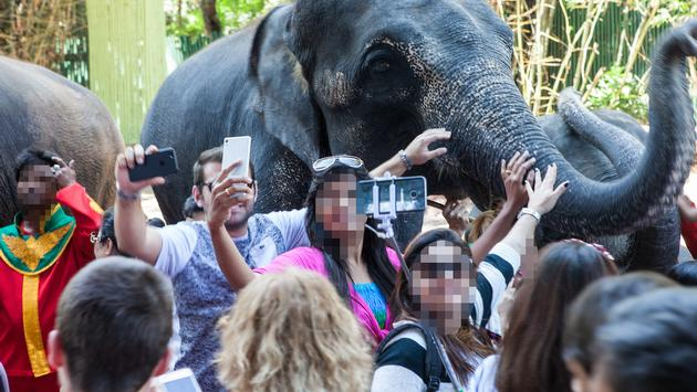 Elephant mobbed by tourists in Thailand