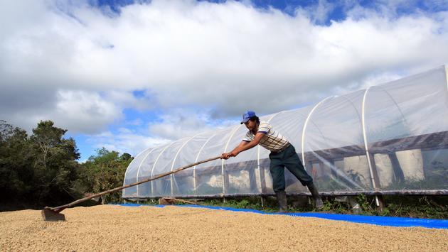 Honduras Announces New Coffee Route