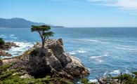 The Lone Cypress along 17-Mile Drive on the Monterey Peninsula.