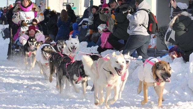 A participant in the Iditarod Trail Sled Dog Race at the ceremonial start in Anchorage, Alaska