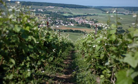 Scenery in the Champagne region of France.