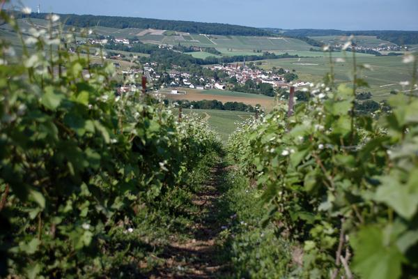 5 Things to Know About the Champagne Region of France