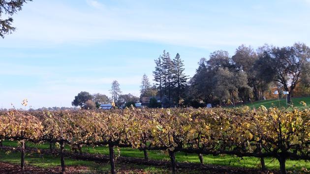 Bogle Vineyards Sacramento California