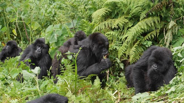 Best Destinations to See Animals in the Wild - 3