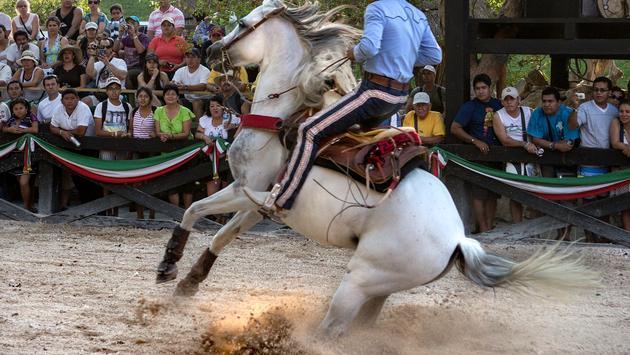 Horses at Xcaret