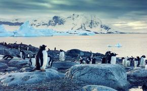 Gentoo penguins on the Antarctic Peninsula
