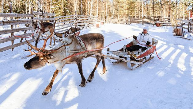 Reindeer ride, Rovaniemi, Finland