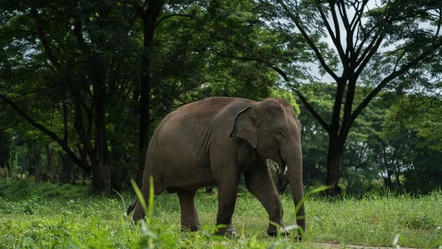 An elephant roaming in the park at Elephant Valley