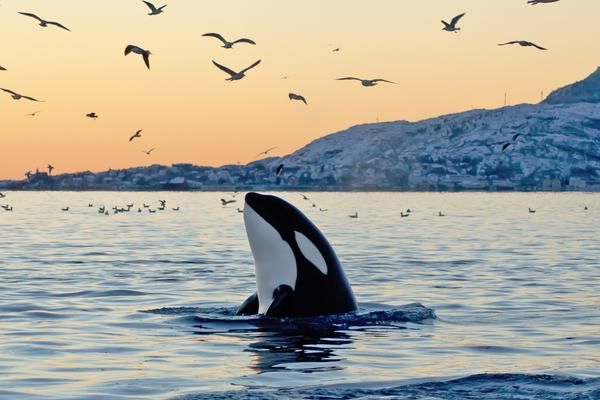 Virgin Holidays Ends Captive Whale and Dolphin Attractions