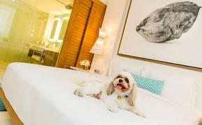 Dog at Grand Hyatt Baha Mar