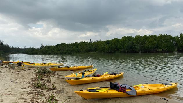 Kayaking in the mangrove forest.