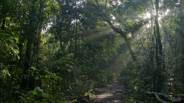 A trail along Pipeline Road in Panama's Soberania National Park