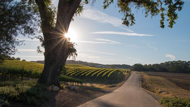 Paso Robles wine country in Central California