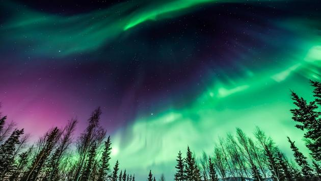Great Northern Lights In Fairbanks, Alaska Design