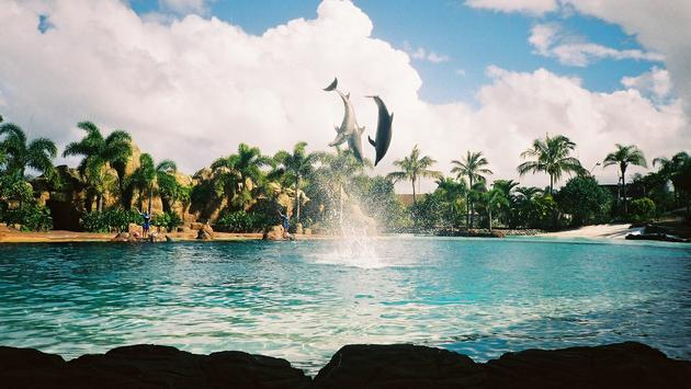 seaworld, dolphin, Orlando