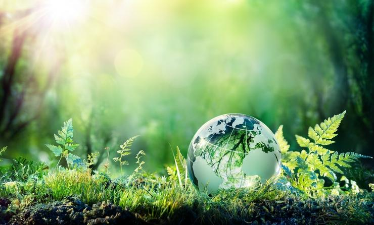Globe On Moss In Forest