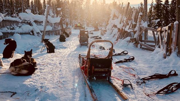Sled dog ride, Harriniva, Finland