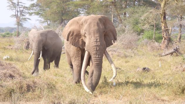 Elephants at Kimana Sanctuary in Kenya