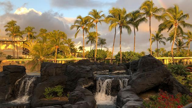 Palm trees and rainbow view in Hawaii